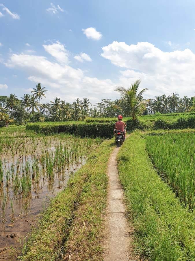 Exploring Ubud in 3 Days