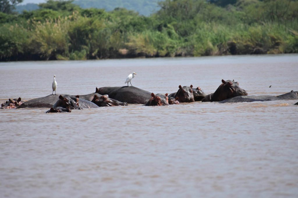 Canoeing safari Victoria Falls