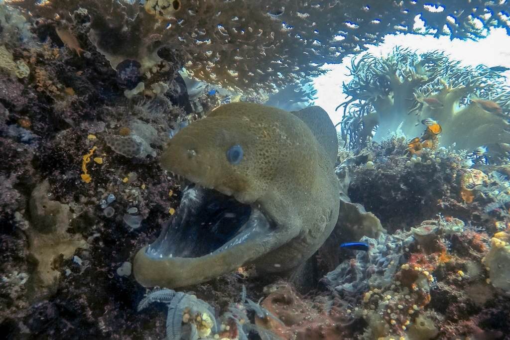 Moray Eel sightings are very common in Komodo