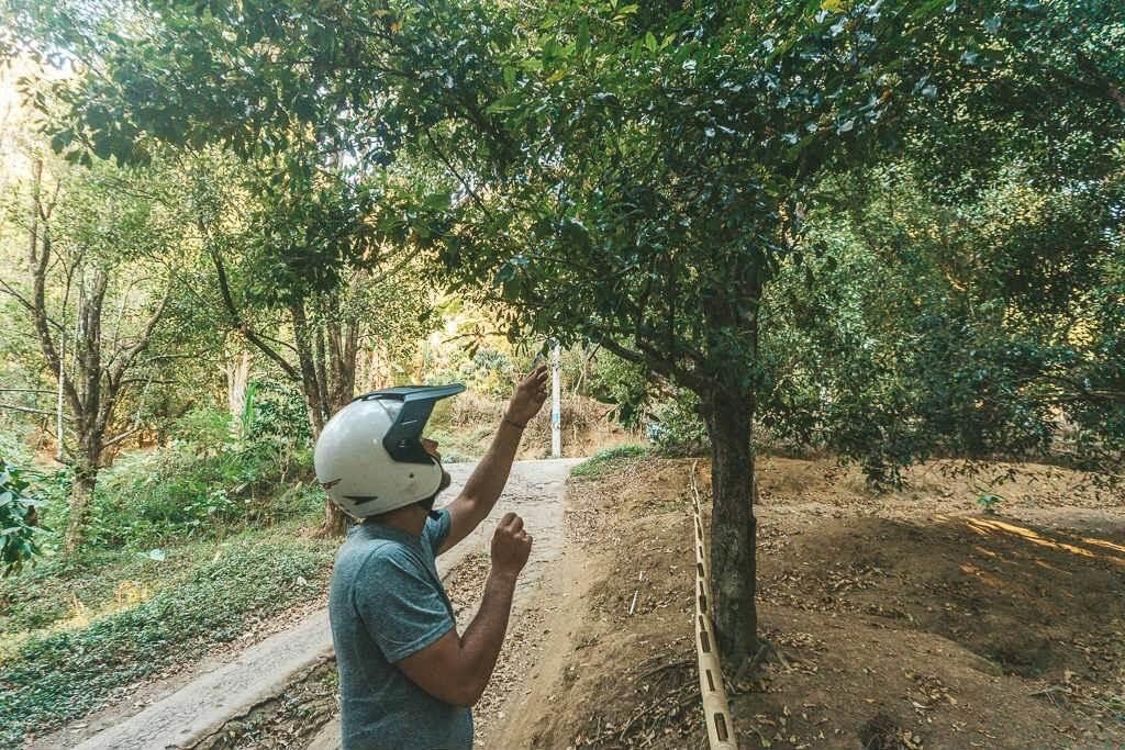 Finding clove plantations in Munduk