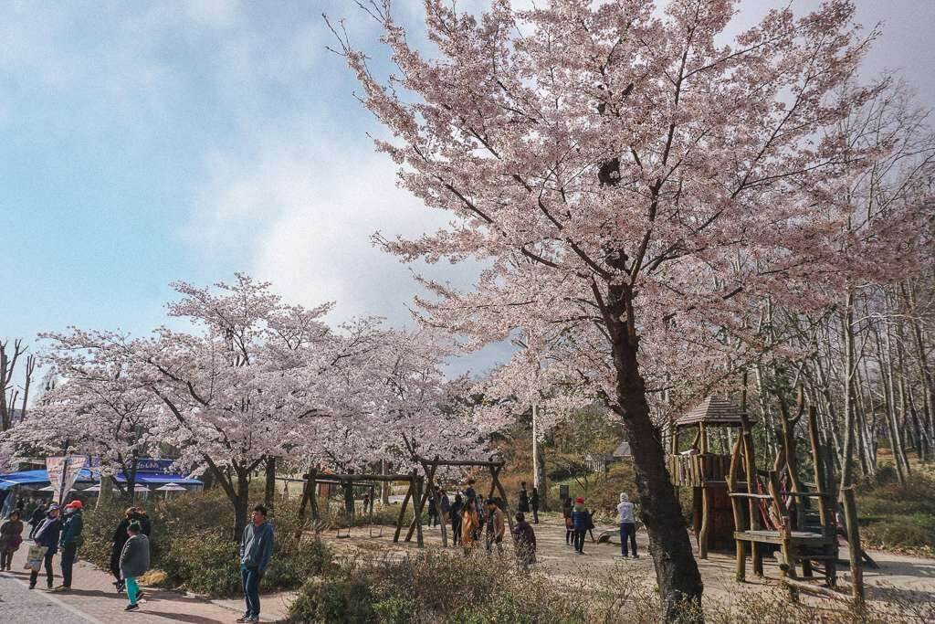 Play areas for children surrounded by cherry blossoms in Seoul
