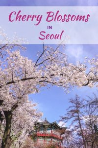 Cherry blossoms in Seoul, South Korea
