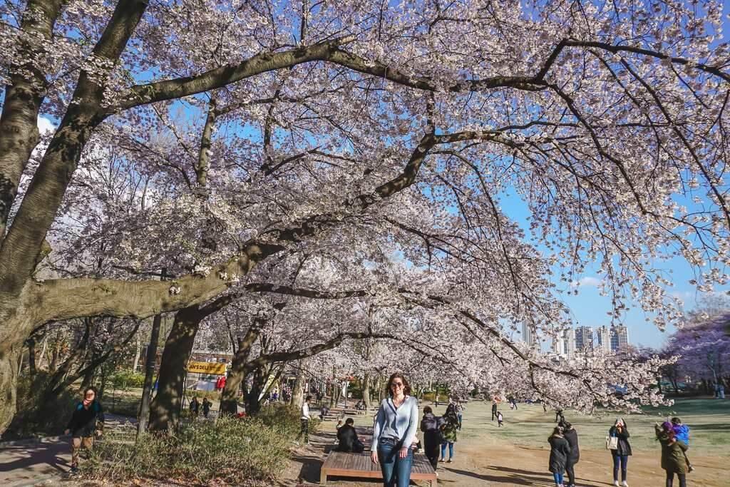 Cherry blossoms at Seoul Children's Grand Park