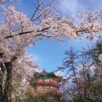 Where to see cherry blossoms in Seoul, Korea