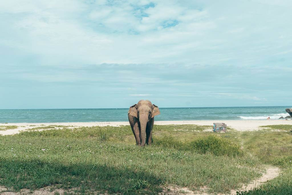 We spotted this big guy at Peanut Farm Beach near Arugam Bay