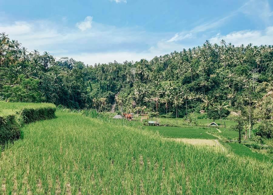 Visiting Sidemen, Bali Waterfalls, Rice Fields, Rafting & More