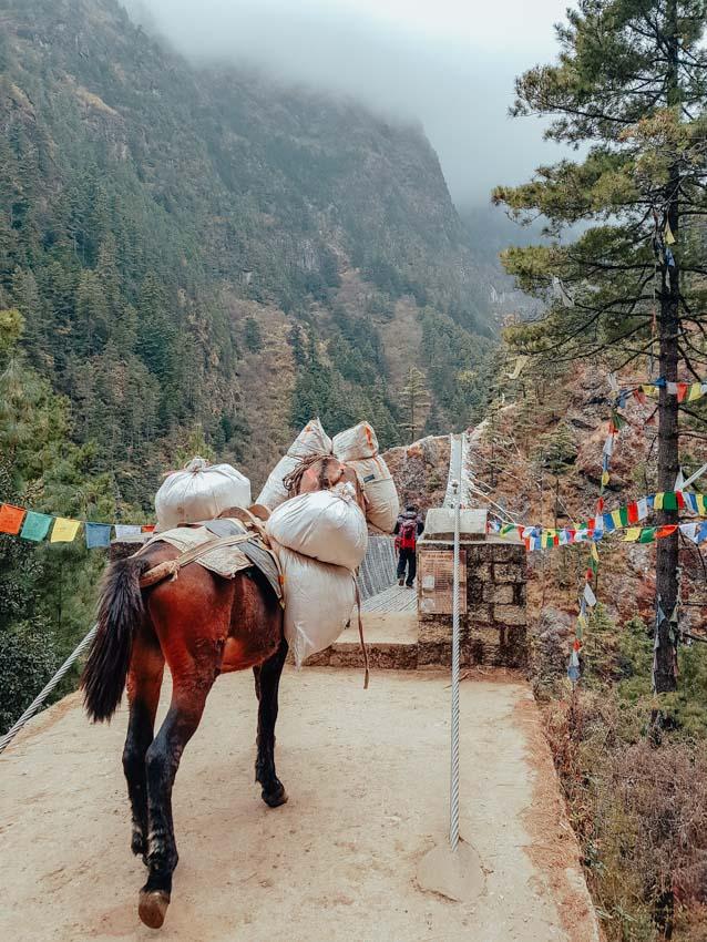 animals on the Everest Base Camp and Island Peak climb