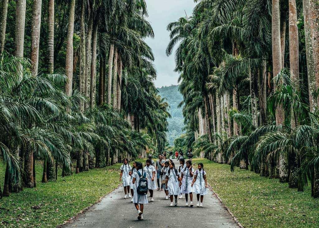 Royal Botanical Gardens in Kandy
