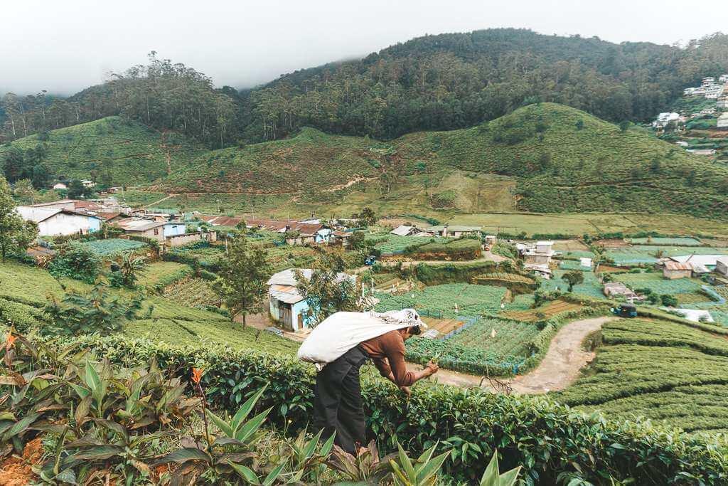 Tea plantations near Kandy