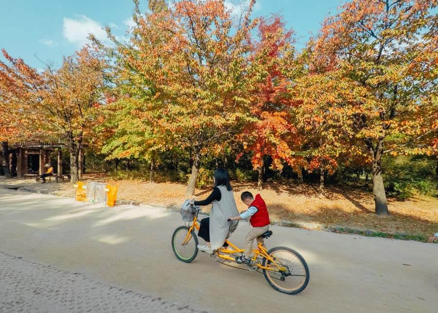 Visiting Seoul Forest in Seoul, South Korea